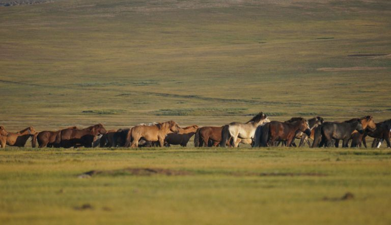 Saraa's Horse Trek Mongolia | Nomadic Herder Trek | 16. September – 26. September 2020