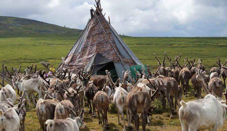 Saraa's Horse Trek Mongolia | Tsaatan Rentier Trek
